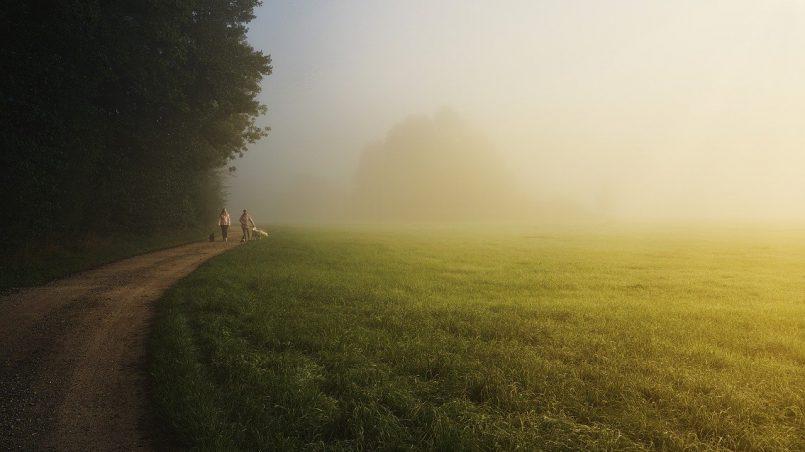 trees, field, trail